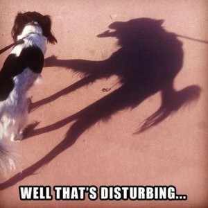 Dog Shadow