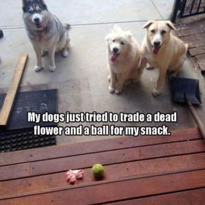 Dogs Trading