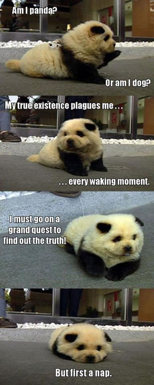 Funny Pictures With Captions Clean With Animals Funny Panda | F...