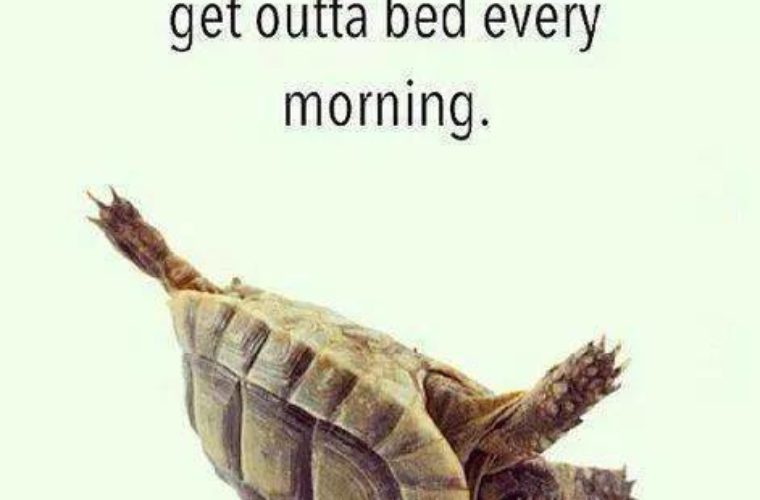 Get outta Bed