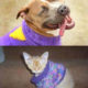Owner Gives Sweater