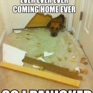 Panicked Dog