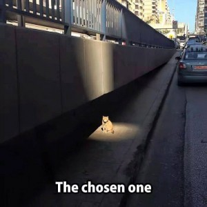 The Chosen One