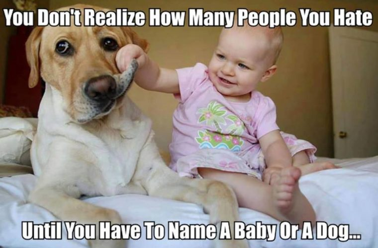 Name a Baby or a Dog