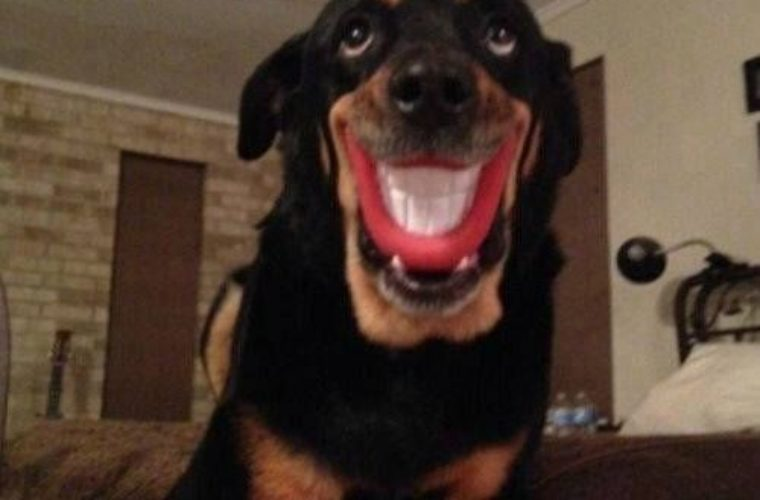 Best Day Ever Dog Smiling