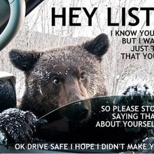 Bear Advice
