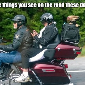 Peoples On Motorcycle