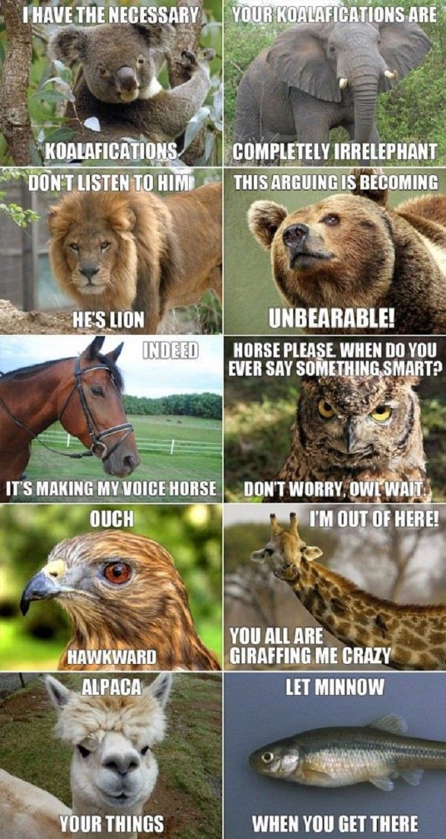 Animals Are Funny