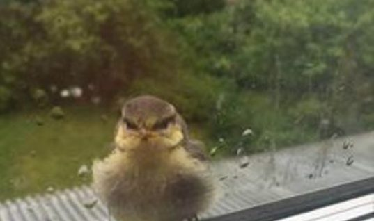Bird On Window