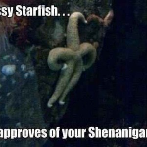 Disapproving Starfish