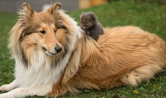 Dog Adopts Orphan Baby Fox