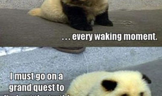Am I panda?  animal captions