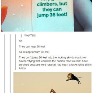 Jumping Lions