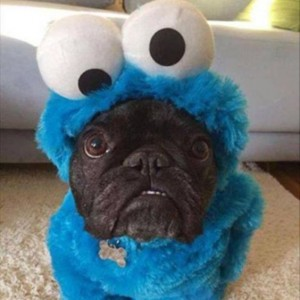 Dog Cookie Monster