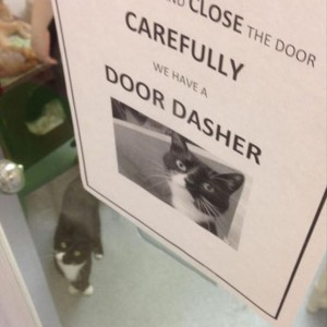 Door Dasher