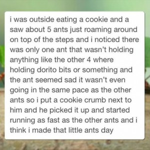 Little Ant