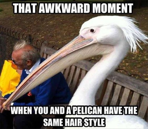 Pelican Hairstyle