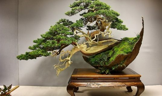 Most stunning Bonsai in the world