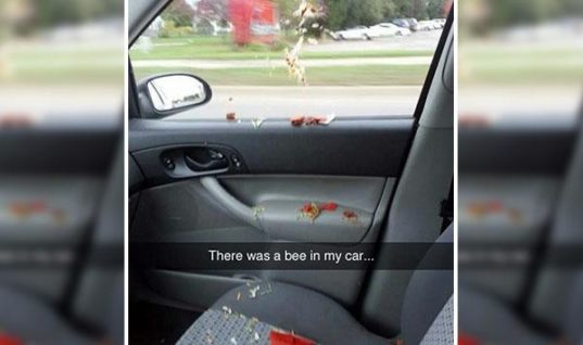 Bee In My Car