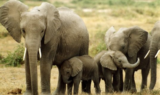 10 Amazing Facts about Elephants