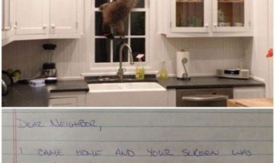 Kitchen Racoon
