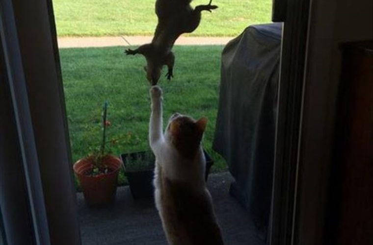 Messing With The Squirrel