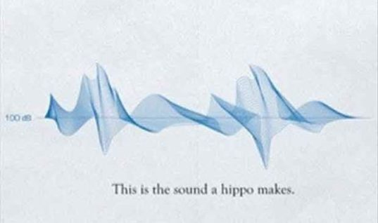 Sound Made By Animals