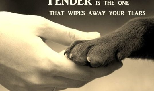 Tender Is The One
