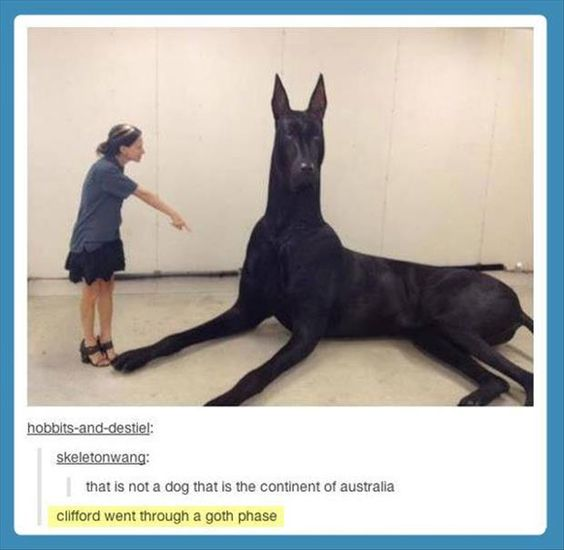 The Continent Of Dog