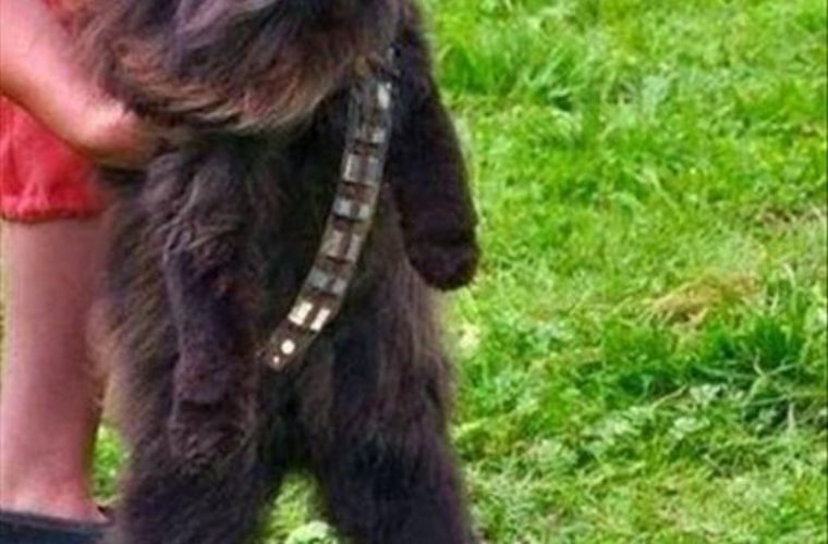 The Wookie Cat