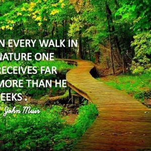 Walk In The Nature