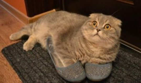 Have You Seen My Slippers