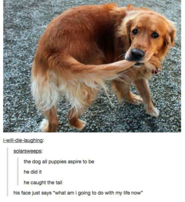 He Caught The Tail