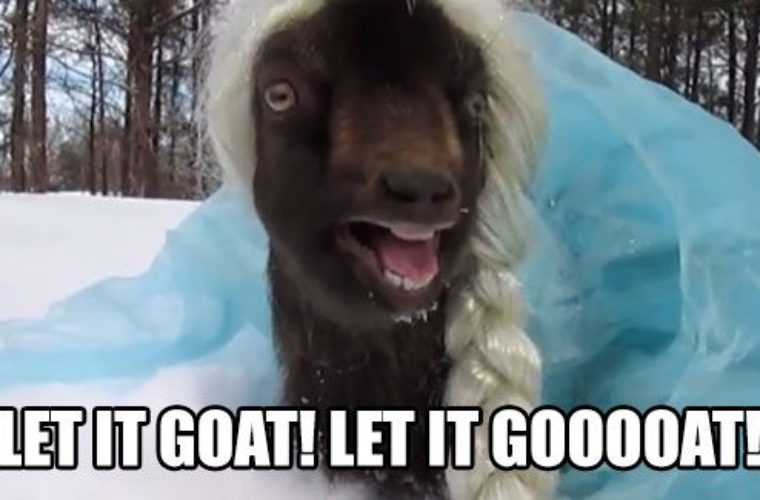 Goat Quotes New Let It Goat Funny Pictures Quotes Memes Funny Images Funny