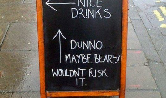 Maybe Bears