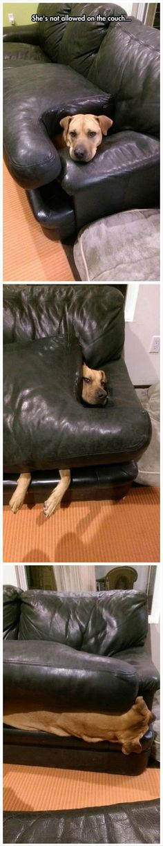 Not On The Couch