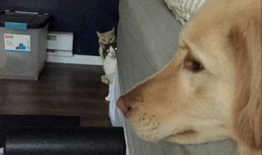 Observing The Golden Enemy