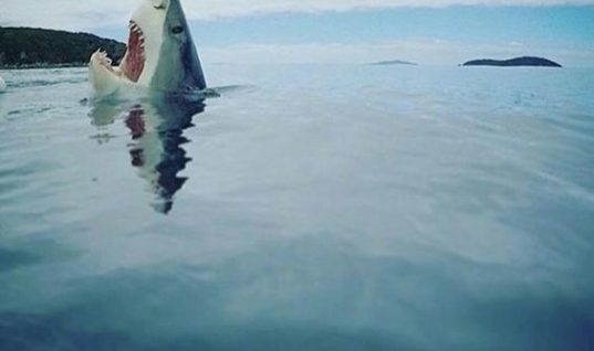 Something Touched The Shark