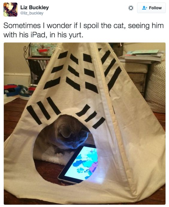 Spoil The Cat