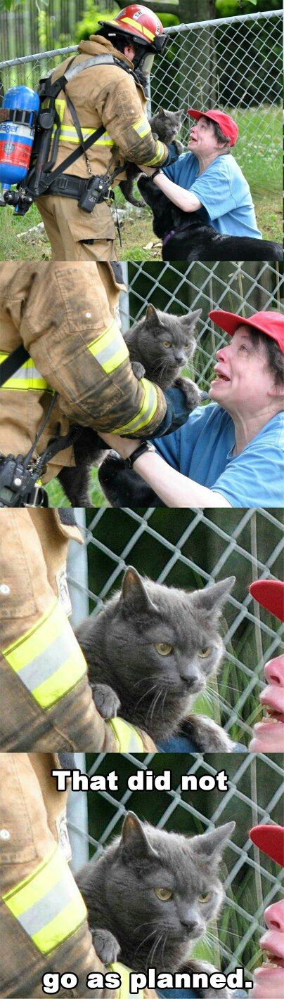 Start Fire Running Cat start fire running cat funny pictures, quotes, memes, funny,Start A Fire Meme