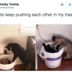 Trash Cat Fun