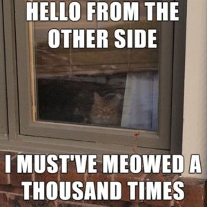 Meowed A Thousand Times