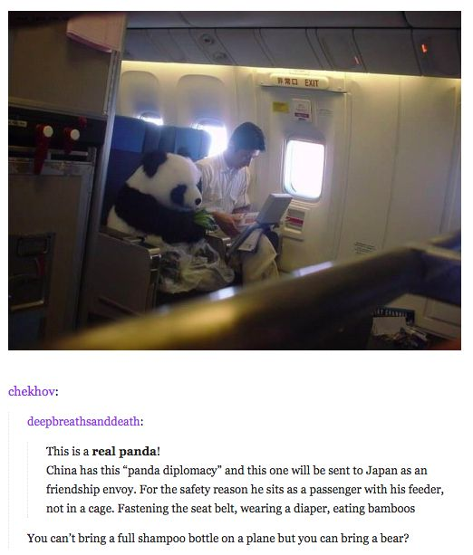 panda on a plane funny pictures quotes memes funny
