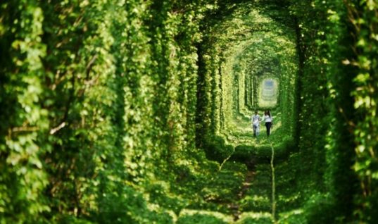 Five Amazing Tree Tunnels