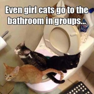 Girl Cats