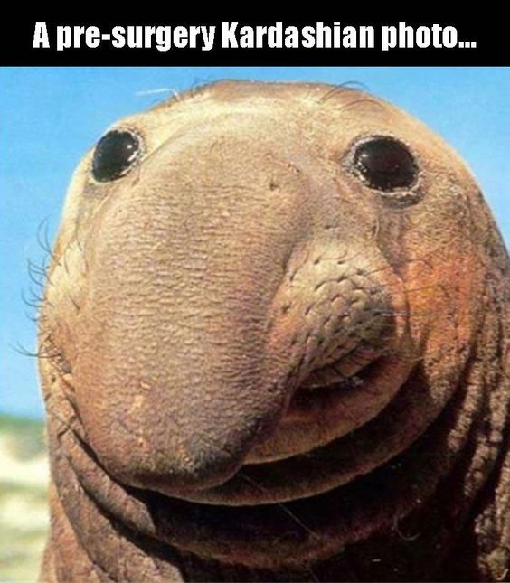 Kardashian Photo Funny Pictures Quotes Memes Funny Images