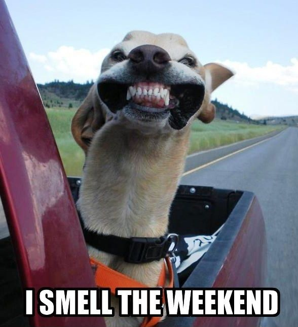 Smell The Weekend