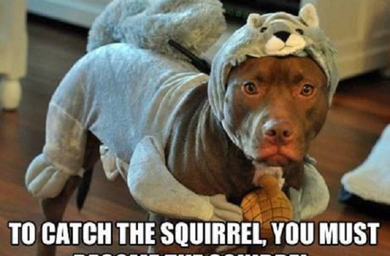 You Must Become The Squirrel