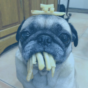 French Fries Pug