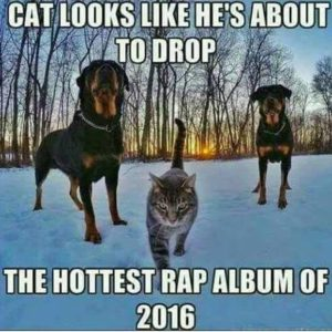 Hottest Rap Album